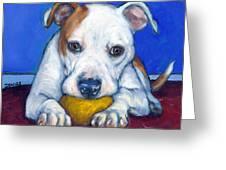 American Bulldog With Yellow Ball Greeting Card by Dottie Dracos