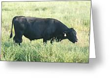 American Cow Greeting Card