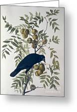American Crow Greeting Card by John James Audubon