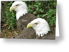 American Eagles Greeting Card
