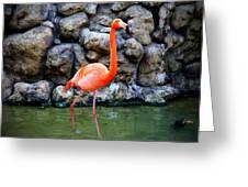 American Flamingo Greeting Card