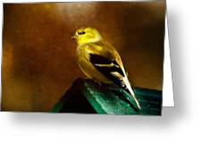 American Gold Finch In Texture Greeting Card