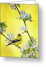 American Goldfich Male Greeting Card