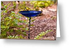 American Goldfinch At Water Bowl Greeting Card