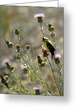 American Goldfinch Having Lunch On Bakery Hill 2 Greeting Card