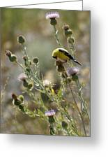 American Goldfinch Having Lunch On Bakery Hill Greeting Card