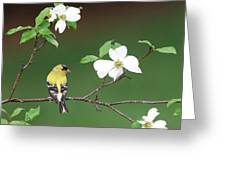 American Goldfinch In Dogwood Greeting Card