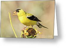 American Goldfinch On Sunflower Greeting Card