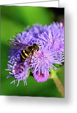 American Hoverfly Greeting Card