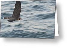 American Kestrel 2 Greeting Card