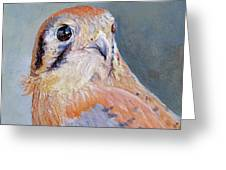American Kestrel No. 2 Greeting Card