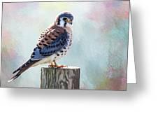 American Kestrel Greeting Card