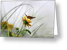 American Lady Butterfly Balancing By The Sea  Greeting Card