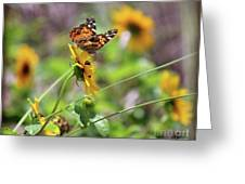 American Lady Butterfly By The Beach Greeting Card