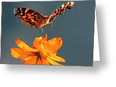 American Lady Butterfly Lands On Cosmos Flower Greeting Card