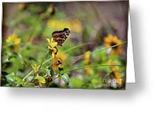 American Lady Butterfly Seaside Greeting Card