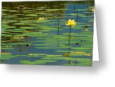 American Lotus Greeting Card