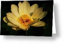 American Lotus Greeting Card by Ron Kruger