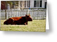American Milking Devon In Spring Greeting Card