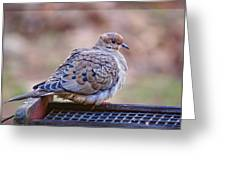 American Mourning Dove Greeting Card