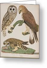 American Owl Greeting Card