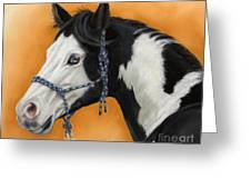 American Paint Horse - Soft Pastel Greeting Card