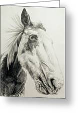 American Paint Horse Greeting Card