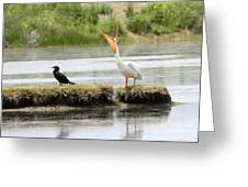 American Pelican With Cormorant Greeting Card