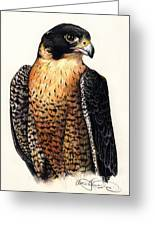 American Peregrine Greeting Card