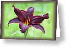 American Revolution With Vignette - Daylily Greeting Card