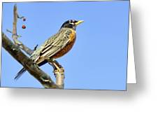 American Robin - 1 Greeting Card