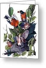 American Robin Audubon Birds Of America 1st Edition 1840 Octavo Plate 142 Greeting Card