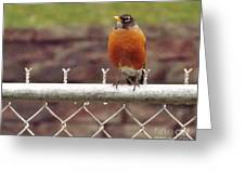 American Robin  In Spring          March            Indiana Greeting Card