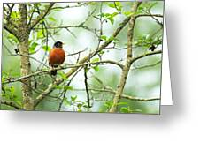 American Robin On Tree Branch Greeting Card