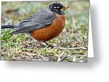 American Robin With Muddy Beak Greeting Card