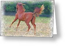 American Saddlebred Filly Greeting Card