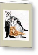 American Shorthair Greeting Card