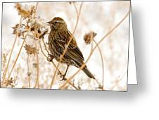 American Sparrow Greeting Card