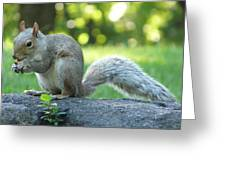 American Squirrel Greeting Card