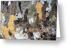 American Sycamore Bark Greeting Card