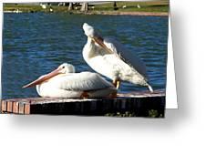American White Pelican 001 Greeting Card