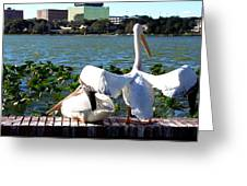 American White Pelican 004 Greeting Card