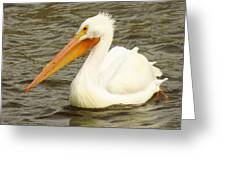 American White Pelican Greeting Card by Lori Frisch