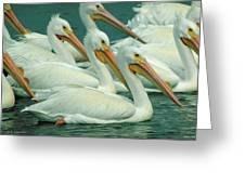 American White Pelicans Greeting Card