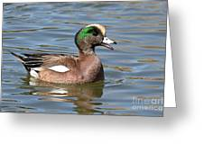 American Widgeon Calling From The Water Greeting Card