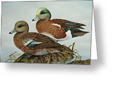American Widgeons Greeting Card by Elaine Booth-Kallweit