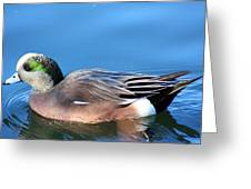 American Wigeon Greeting Card