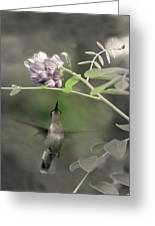 American Wisteria Greeting Card