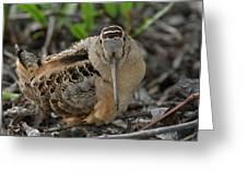 American Woodcock Greeting Card