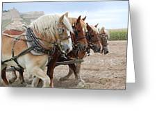 American Work Horse Greeting Card